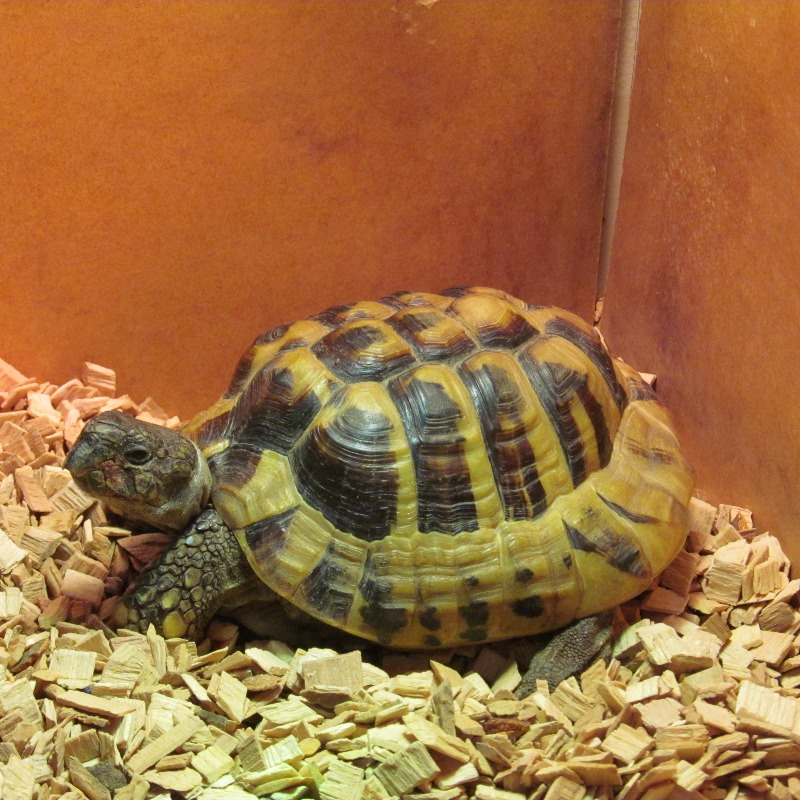 Ted the Tortoise